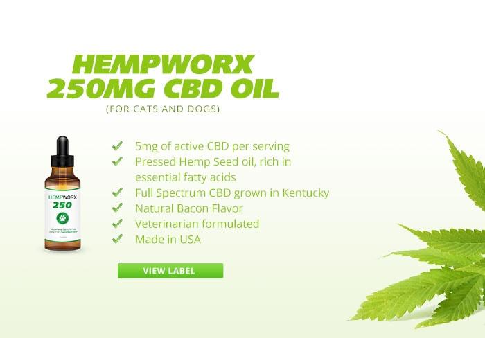Hempworx Cbd Dog Treats Hempworx 250 Cbd Oil Product